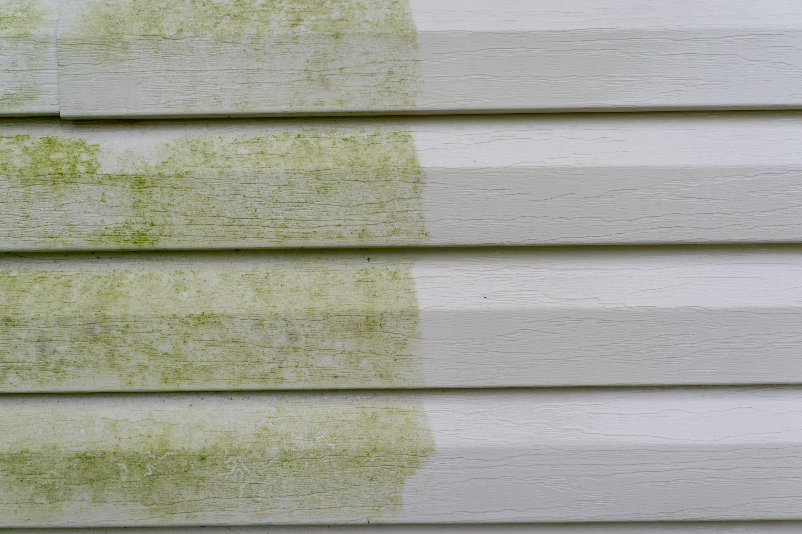 vinyl siding house washing algae removal